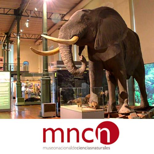 Museo-Nacional-Ciencias-Naturales